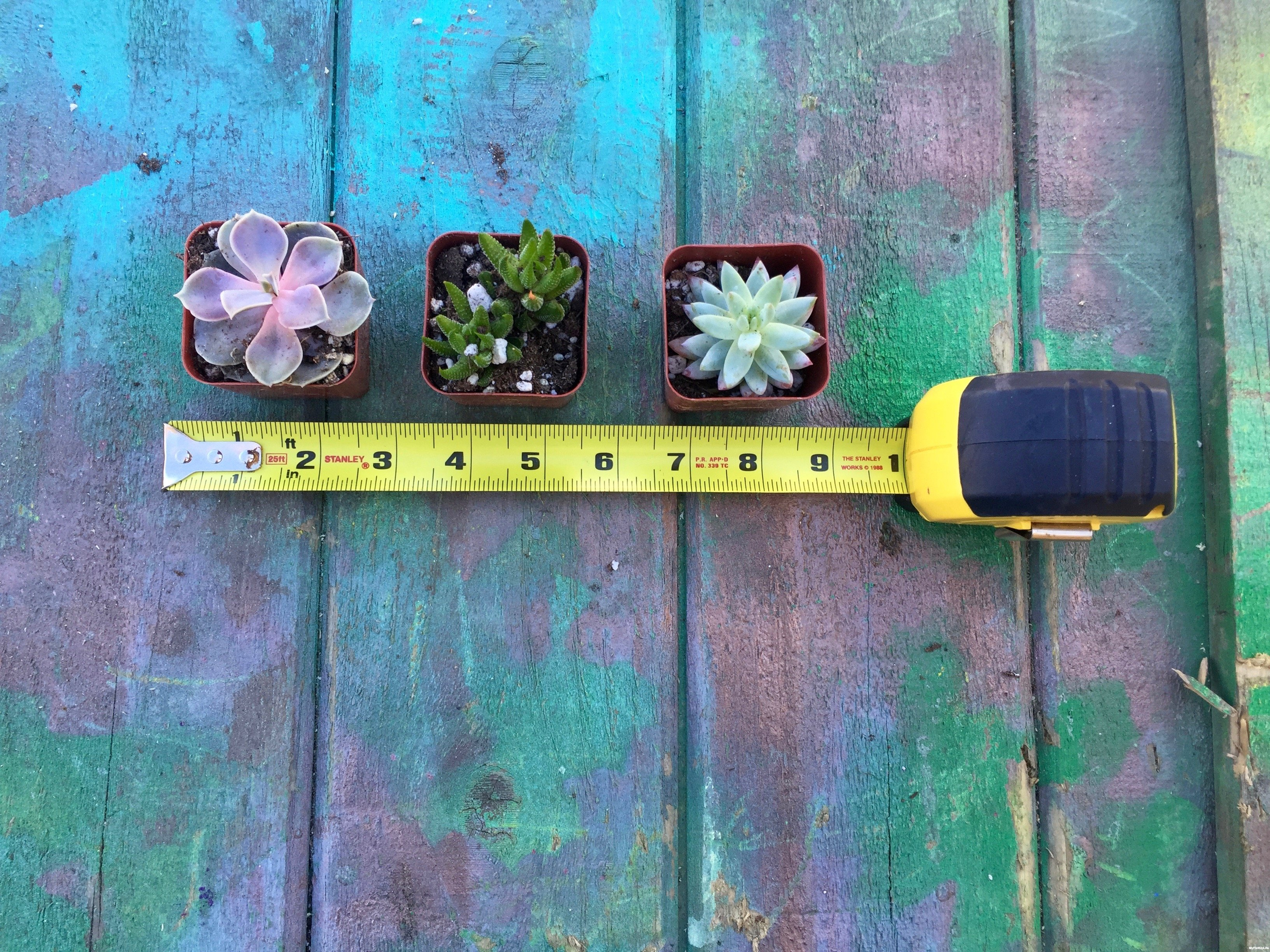 1-measure-succulents-Minwax-Succulent-Pallet-Wood-Wall-Art
